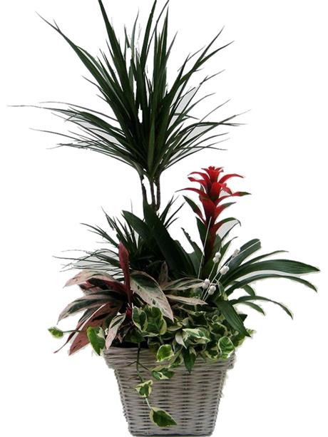 Σύνθεση εποχιακών φυτών σε καλάθι - 85€