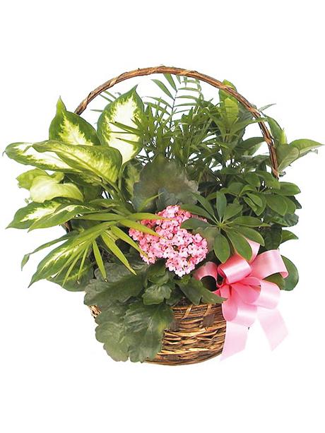 Καλάθι με ανθισμένα φυτά εποχής - 50€