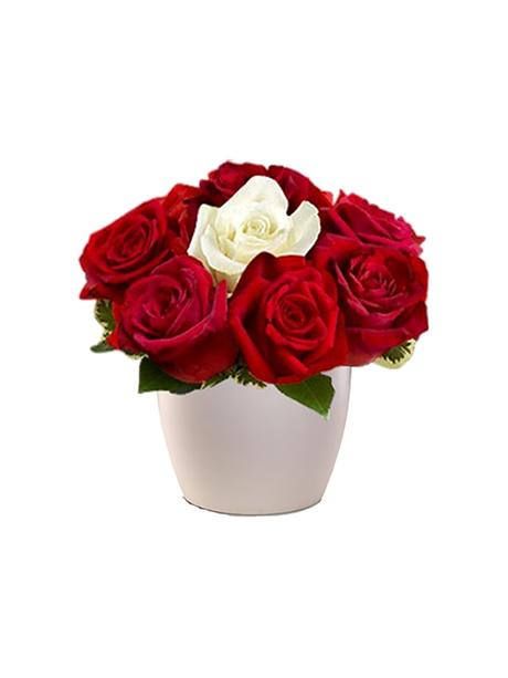 Κόκκινα τριαντάφυλλα κάνουν παρέα σε ένα ξεχωριστό αγνό λευκό. - 40€