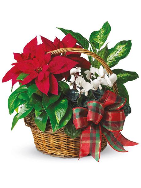 Καλάθι γιορτινό με φυτά της εποχής. - €50.00